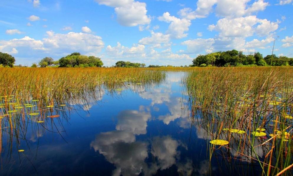 Okavango_Delta-994x597